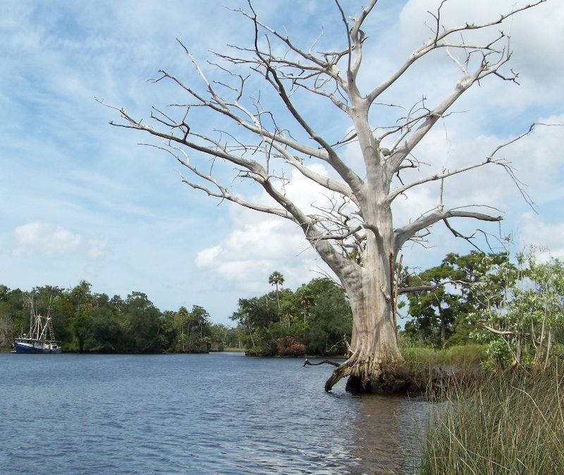 Shoreline Mapping of the Withlacoochee River